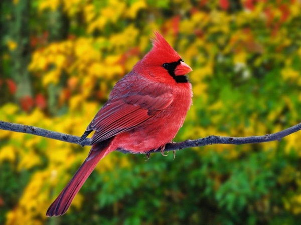 beautiful-birds- (5)
