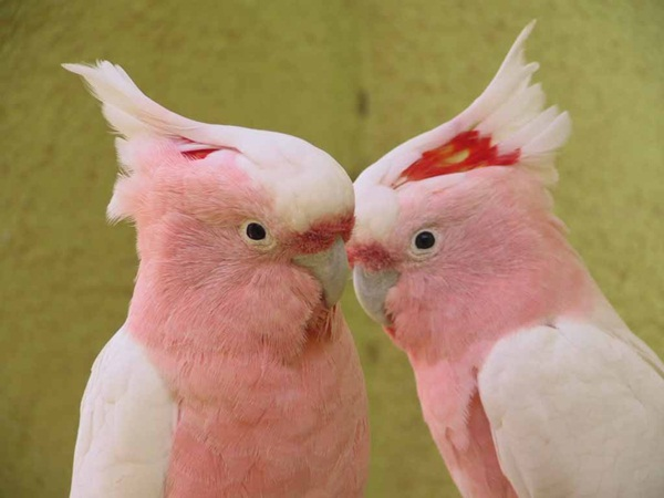 beautiful-birds- (15)