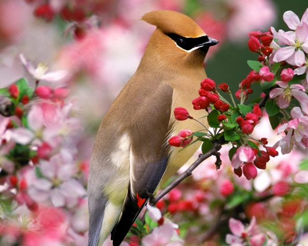 beautiful-birds- (17)