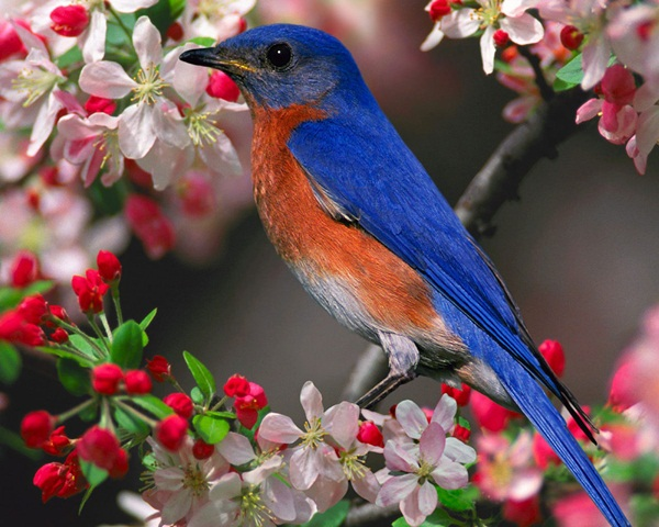 beautiful-birds- (18)