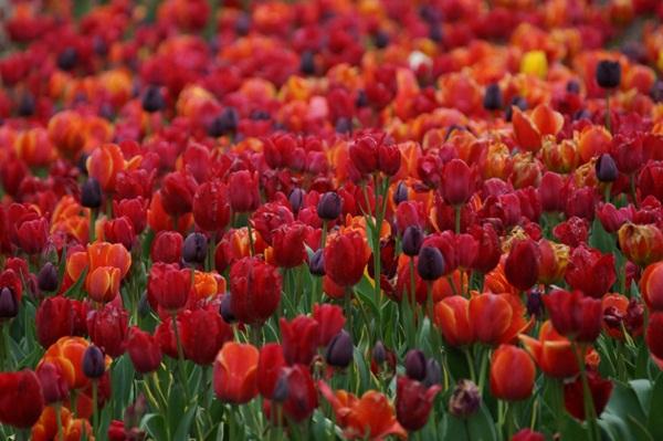 spring-photos-01 (2)