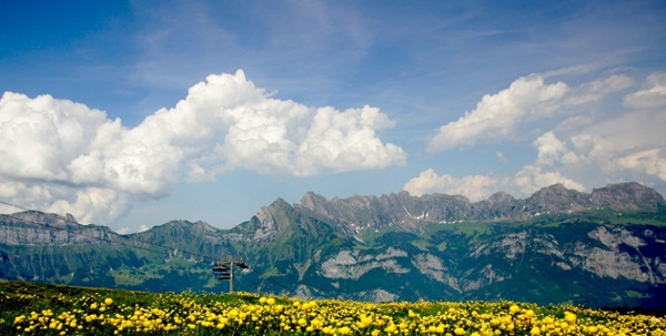 spring-photos-01 (3)