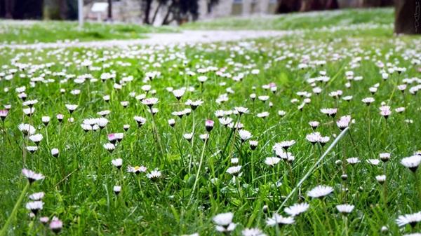 spring-photos-01 (14)