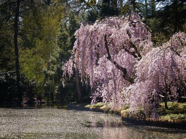 spring-photos-01 (17)