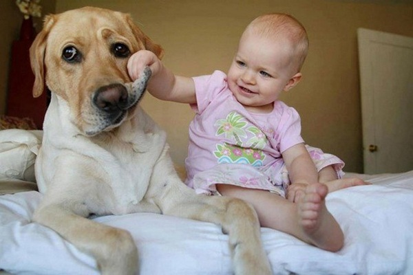 babies-with-dog- (3)