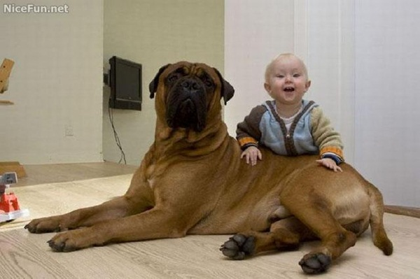 babies-with-dog- (14)