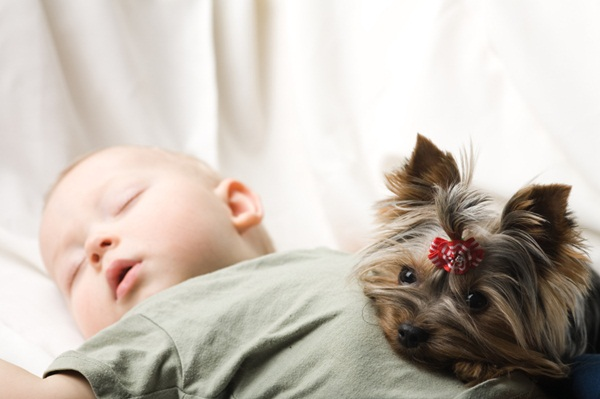 babies-with-dog- (18)