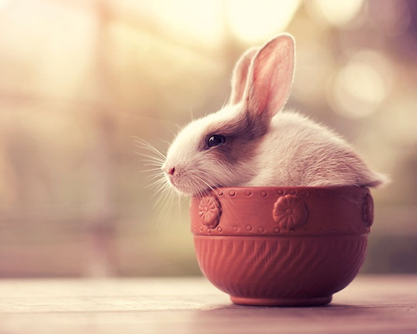 cute-rabbit-photos- (1)