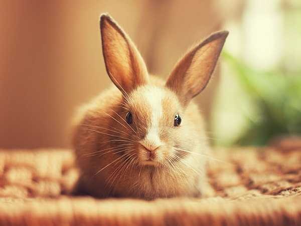 cute-rabbit-photos- (2)