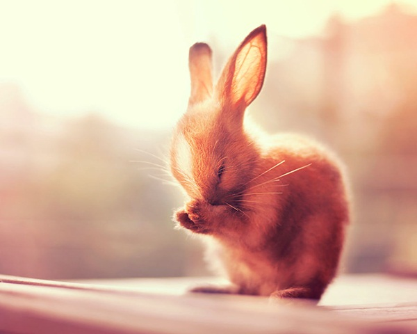 cute-rabbit-photos- (3)