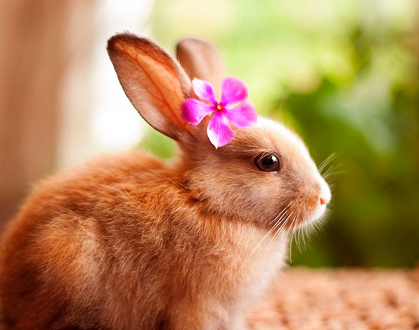 cute-rabbit-photos- (4)