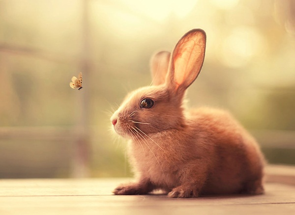 cute-rabbit-photos- (5)