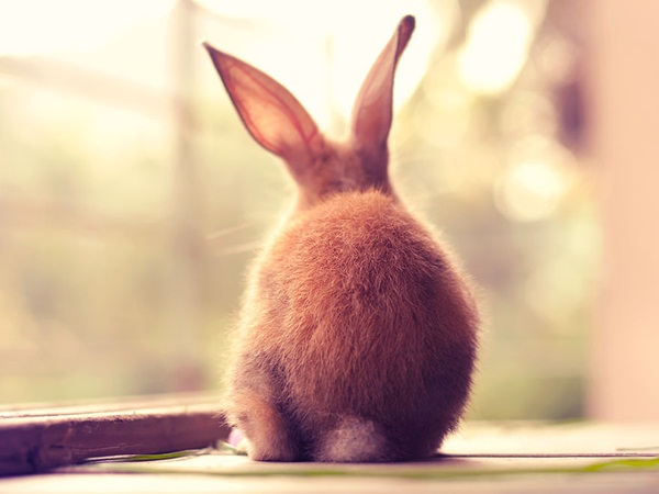 cute-rabbit-photos- (6)