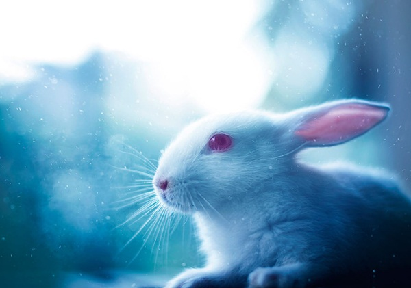 cute-rabbit-photos- (7)