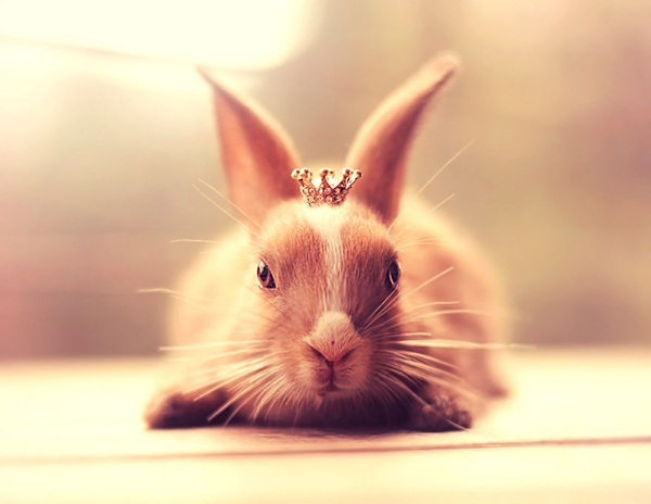 cute-rabbit-photos- (8)