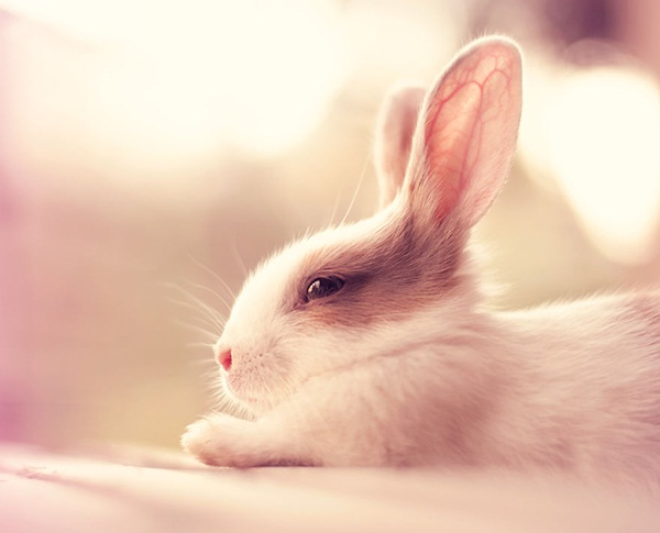 cute-rabbit-photos- (9)