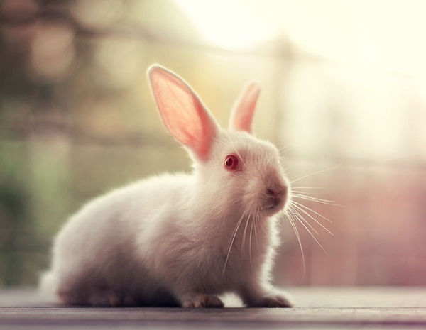 cute-rabbit-photos- (10)