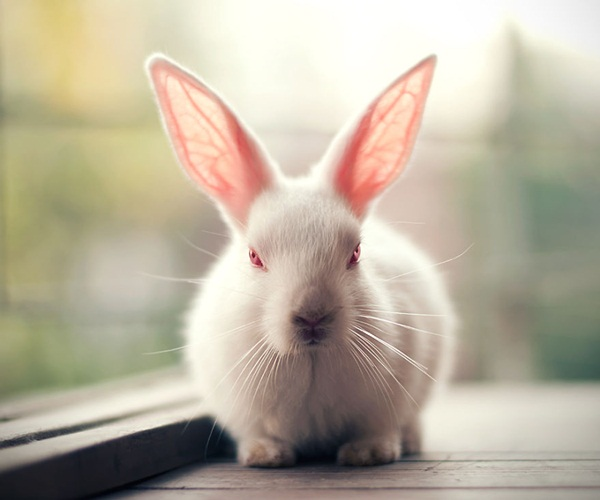 cute-rabbit-photos- (12)