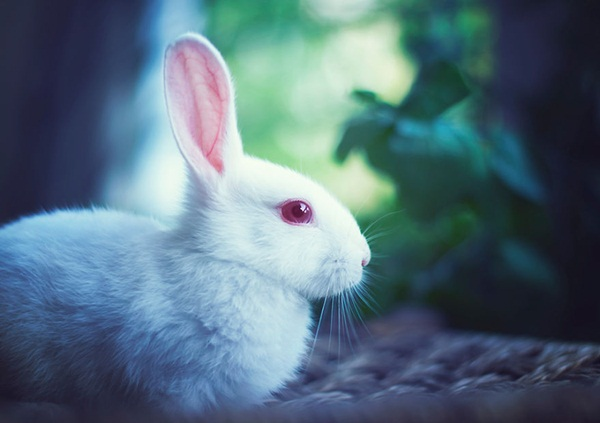 cute-rabbit-photos- (15)