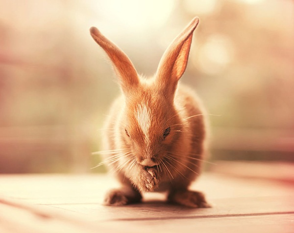 cute-rabbit-photos- (16)