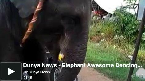 elephant-dancing-