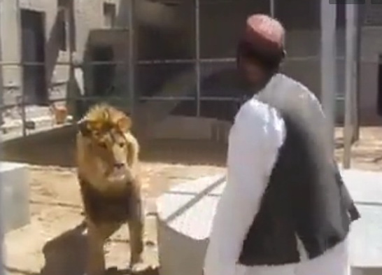 man-vs-lion-
