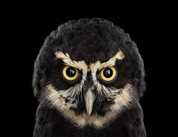 photos-of-owls- (1)