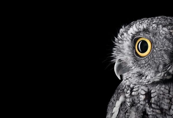 photos-of-owls- (2)