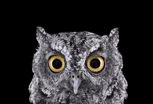 photos-of-owls- (3)
