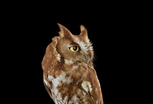 photos-of-owls- (4)