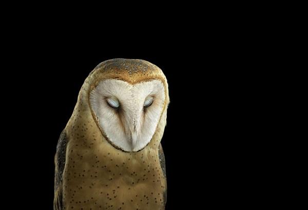 photos-of-owls- (6)