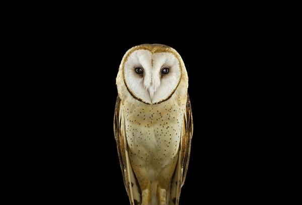 photos-of-owls- (7)
