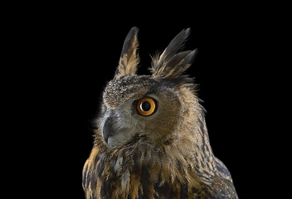 photos-of-owls- (8)