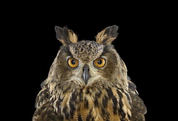 photos-of-owls- (9)