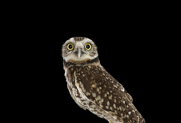 photos-of-owls- (10)