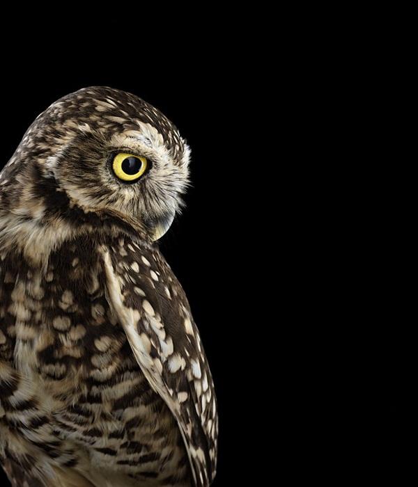photos-of-owls- (11)