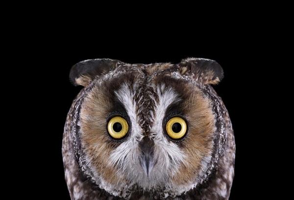 photos-of-owls- (12)