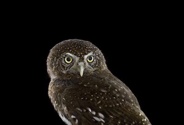 photos-of-owls- (13)