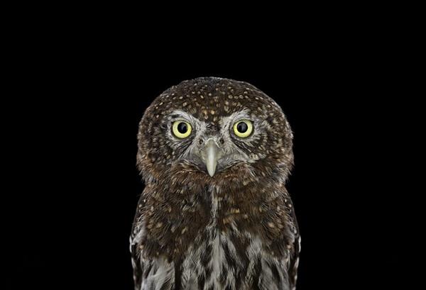 photos-of-owls- (14)