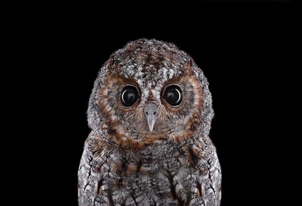 photos-of-owls- (15)