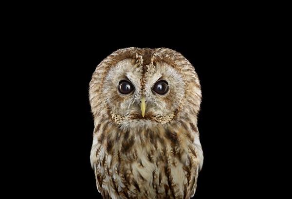 photos-of-owls- (16)