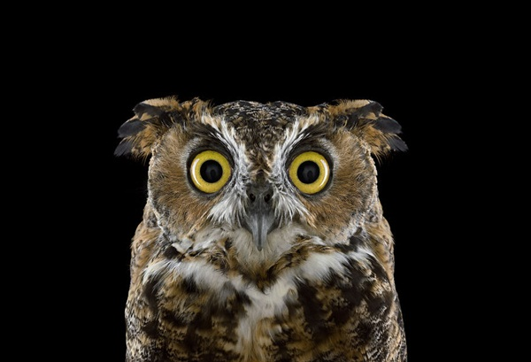 photos-of-owls- (17)