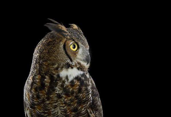 photos-of-owls- (18)