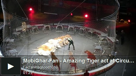 tiger-act-at-circus-