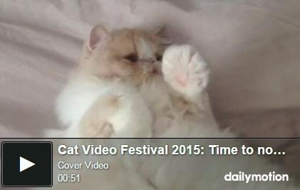 cat-video-festival-2015-