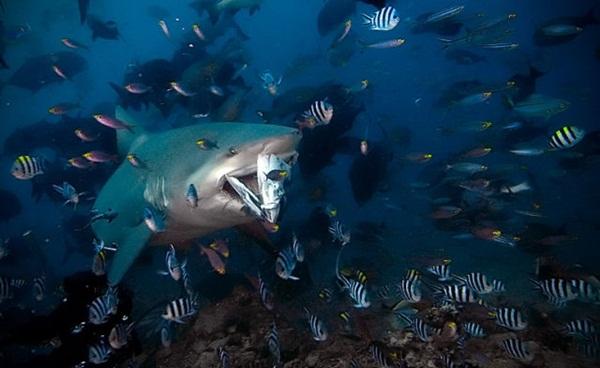 underwater-photos-by-alexander-safonov- (8)