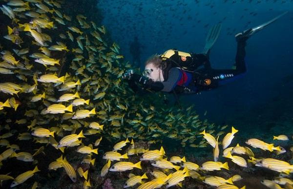 underwater-photos-by-alexander-safonov- (11)