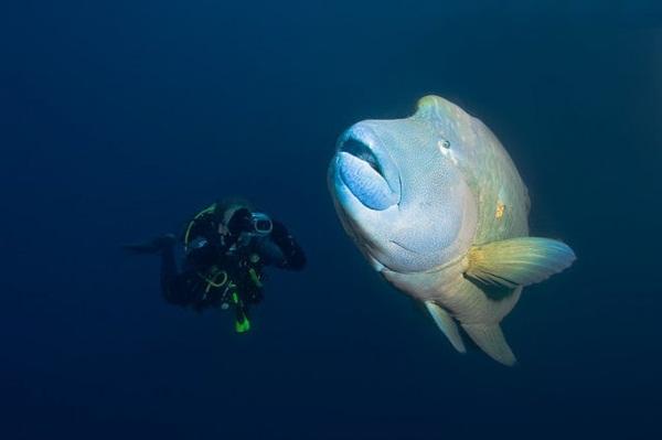 underwater-photos-by-alexander-safonov- (12)