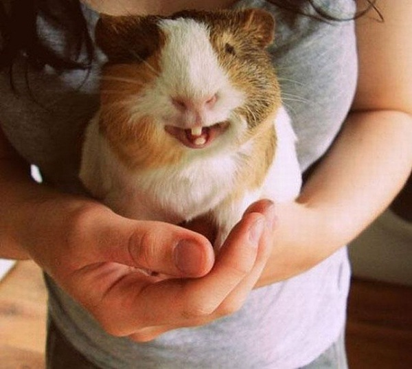 funny-pictures-of-smiling-animals- (12)