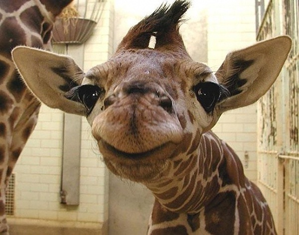 funny-pictures-of-smiling-animals- (13)